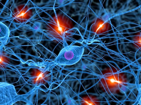 Generamos los adultos neuronas-La neurogénesis en las personas mayores