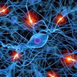 ¿Generamos los adultos neuronas?,  La neurogénesis en las personas mayores